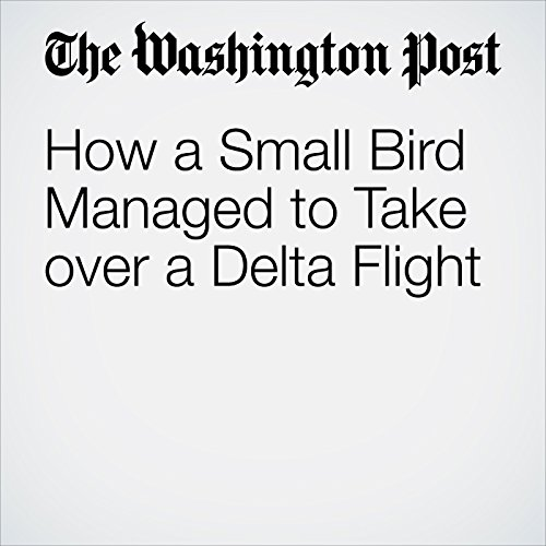How a Small Bird Managed to Take over a Delta Flight copertina