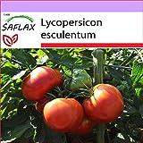 SAFLAX - Tomate - Rosa de Berne - 10 semillas - Lycopersicon esculentum
