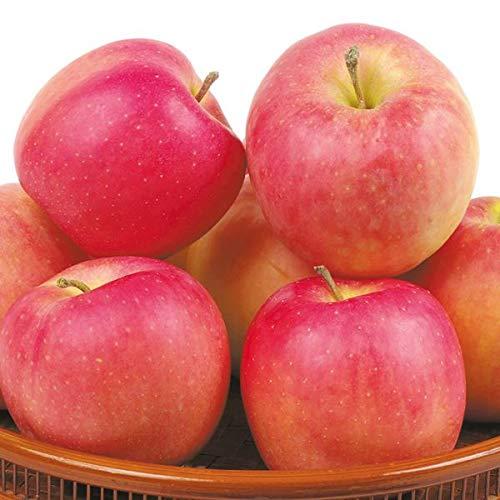 国華園 食品 青森産 むつ 10�s1箱 りんご