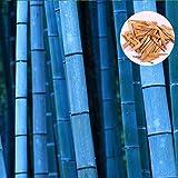 Beautytalk Jardin-Chine moso graines de bambou géant graines de bambou graines exotiques plantes rustiques croissance rapide plante vivace pour jardin