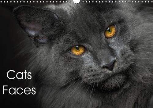 The cat faces (Wall Calendar 2017 DIN A3 Landscape): Maine Coon cat faces (Monthly calendar, 14 pages ) (Calvendo Animals) [Kalender] [Jun 16, 2016] Sijka, Robert