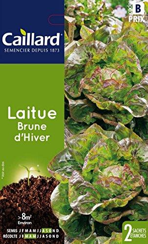 Caillard PFCC13400 Graines de Laitue Brune d'Hiver