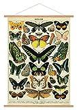 Cavallini Papers & Co. Cavallini Vintage Schmetterlinge zum