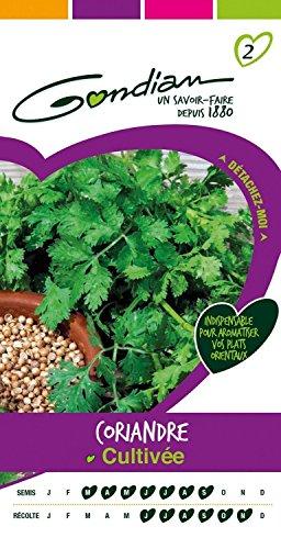 Gondian 166960 CP 2 Semences Coriandre Cultivée Vert 1 x 8,1 x 16 cm