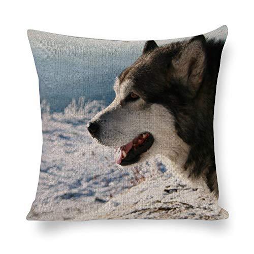 Dartys Cotton And Hemp Pillowcase Alaskan Malamute (5) Cotone e Lino federe per Cuscini Classico contenta Vecchio Stile Moda Strisce 45x45cm 18x18pollici Cuscino Cuscino