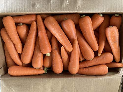 訳あり にんじん 約10kg 国産 有機低農薬栽培 除草剤不使用 ベジップル産地厳選
