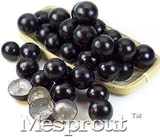 brazilian grape tree seeds