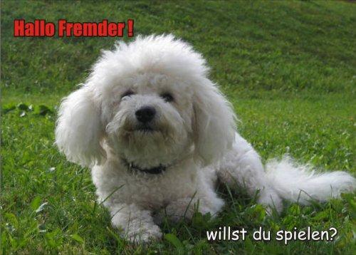 INDIGOS UG - Türschild FunSchild - SE473 - ACHTUNG Hund Elo - für Käfig, Zwinger, Haustier, Tür, Tier, Aquarium - DIN A4 PVC 3mm stabil