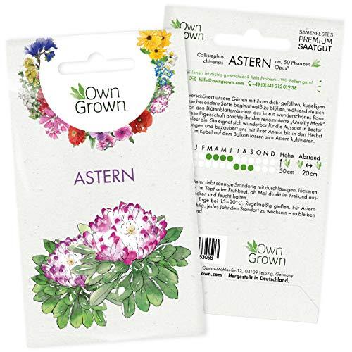 Astern Samen: Premium Aster Samen für ca. 50 blühende Astern Pflanzen – Bunte Blumensamen für Bienen, Sommerblumen Samen – Blumensamen Balkon – Callistephus chinensis Sommeraster Saatgut von OwnGrown