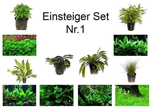 Tropica Einsteiger Set mit 6 Einfachen Topf Pflanzen Aquariumpflanzenset Nr.1 Wasserpflanzen Aquarium Aquariumpflanzen