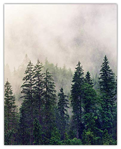 Foggy Forest Wall Art Print - (8x10) Unframed Picture For Home, Office, Dorm & Chic Bedroom Decor - Great Gift Idea Under $15
