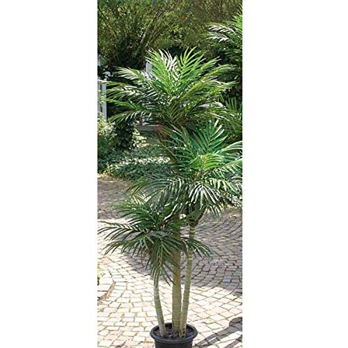 artplants.de Set 'Areca Artificial + Spray de protección UV' - Palmera bambú de plástico Carry, 150cm