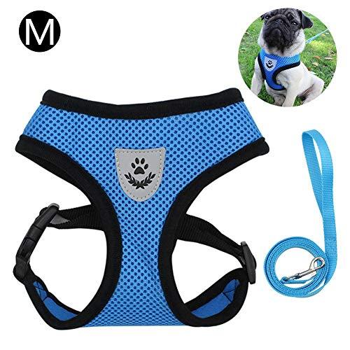 Eillybird Hund Katzengeschirr, Hundeweste Sicherheitsgurt No Pull Comfort Gepolsterte Westengurte Für kleine Haustierkatze Welpen Gehen, Training