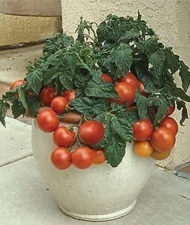 Patio Princess Hybrid Tomato 200 Seeds