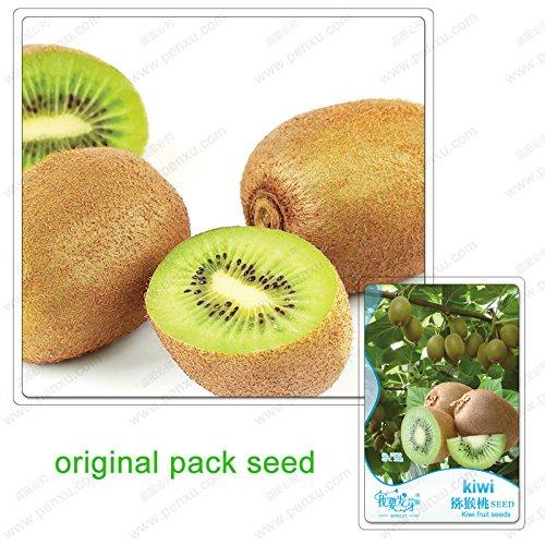 30 graines/Pack, plantes mini-Thai balcon bonsaïs en pot de semences biologiques délicieux fruit nutritif petit