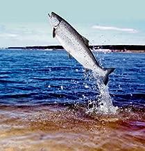 Tailee the Talking Salmon