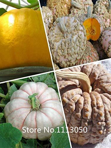 VISTARIC Effacer: Big vente emballage d'origine 20 graines/Pack, graines de melon d'or en remuant, le melon Watkins remuer fruits en pot Balcon et légumes