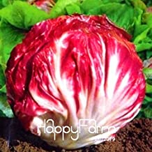 Flowers Seeds Plant Seeds Hot Sale!100 Pieces/Bag Red Cabbage Chicory Bonsai Selling Health Vegetable,#7YN2B5