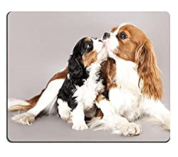 MSD天然ゴムマウスパッドイメージID : 12195242 Cavalier King Charles Spaniel[MSD/Amazon]
