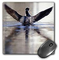 3drose LLC 8x 8x 0.25インチマウスパッド、ミネソタハシグロアビ鳥Leech湖ピーターHawkins (MP 91396_ 1)