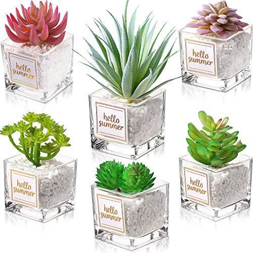 Juego de 6 Plantas Artificiales de Cactus Suculentas con Piedras en Vidrio Transparente Macetas Cuadradas Macetas de Mini Vegetación Realista Surtida Maceta de Áloe Planta de Imitación para Decoración