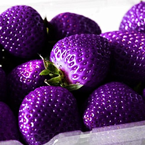 Pinkdose® Davitu 500 Teile/paket Lila Erdbeere Samen Garten Samen Obst Samen Super Erdbeere Kletterpflanze