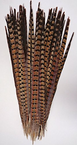 """25 pc, Ringneck pheasant tails, 15-20"""" HAND SELECTED, per package of 25, by Lamplight Feather, Inc."""