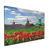 PATINISA Cuadro en Lienzo,Molinos de viento holandeses tradicionales con tulipanes rojos en Amsterdam Scenic Field River Decorativo,Impresión Artística Imagen Gráfica Decoracion de Pared