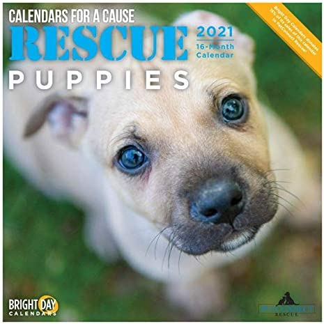 2021 Rescue Puppies Wall Calendar by Bright Day 12 x 12 Inch Cute Dogs Calendars for a Cause product image