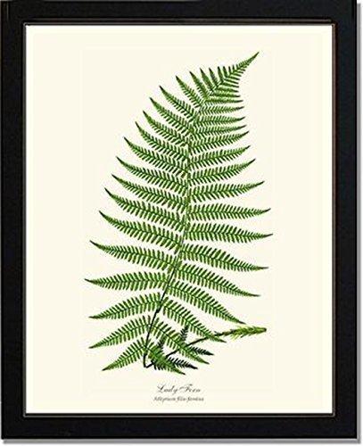 Top fern art prints 5×7 for 2020