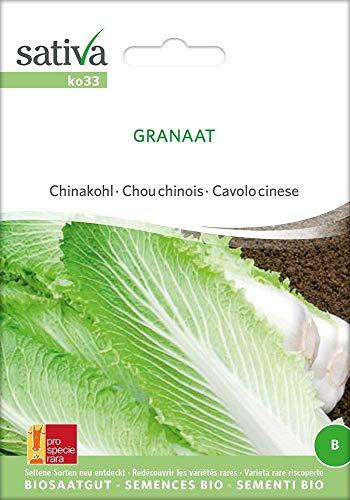 Sativa Rheinau ko33 Chinakohl Granat (Bio-Chinakohlsamen)