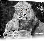 schöner Löwe mit Jungtier schwarz/weiß auf Leinwand, XXL