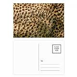 DIYthinker Pluma leopardo Gracias tarjeta del diseño del extracto tarjetas postales conjunto de cumpleaños de correo lateral 20Pcs 5,7 pulgadas x 3,8 pulgadas Multicolor