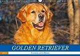 Golden Retriever - Freunde auf 4 Pfoten (Wandkalender 2021 DIN A3 quer)