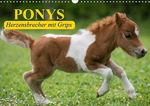 Ponys. Herzensbrecher mit Grips (Wandkalender 2019 DIN A3 quer): Süße Frechdachse mit Löwenherz (Geburtstagskalender, 14 Seiten ) (CALVENDO Tiere)