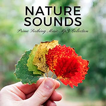 Nature Sounds - Prime Soothing Music Mp3 Collection