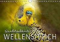 Wunderschoener Wellensittich (Wandkalender 2022 DIN A4 quer): Eindrucksvolle Bilder der beliebten Voegel. (Monatskalender, 14 Seiten )