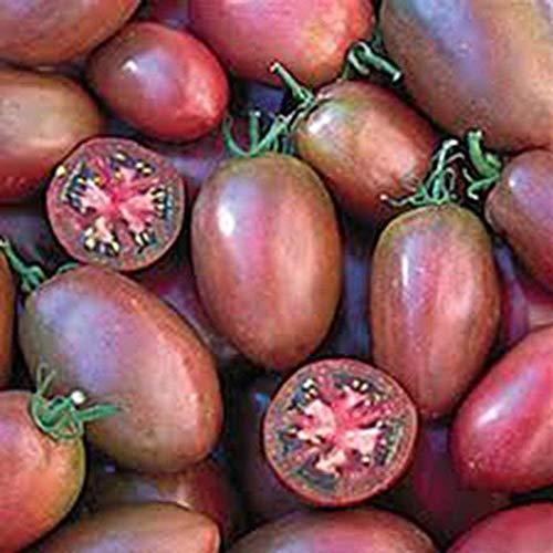 SunYueY 50 Unids Semillas De Tomate Jardín Nutritivo Vegetal Fruta Bonsai Yard Balcón Planta, No GMO Semillas de Tomate UVA Morada