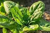 BIO - spinaci'Winterreuzen' biologici certificati - 800 semi