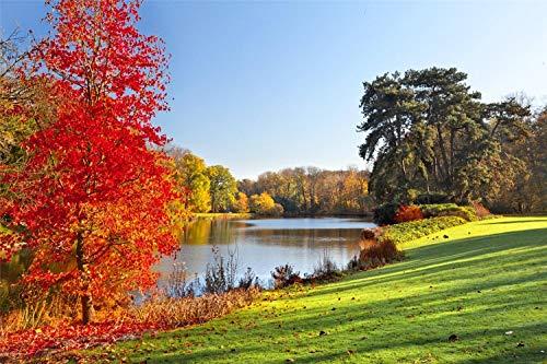 Rompecabezas Para Adultos 1000 Piezas Otoño Parque Lago Árboles Hojas Montaje De Madera Decoración Para El Hogar Juego De Juguetes Juguete Educativo Para Niños Y Adultos Regalo