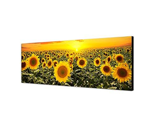 Leinwandparadies, quadro da parete su tela, panorama campo di girasoli, tramonto 150x 50cm