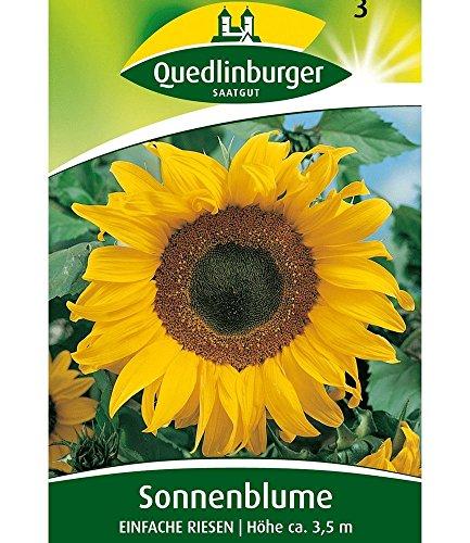 Sonnenblume 'Einfache Riesen', 1 Tüte Samen