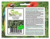 950 semillas de menta jardín novedad fresca semilla K242