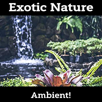 Best Exotic Nature Sounds for Relaxation, Massage