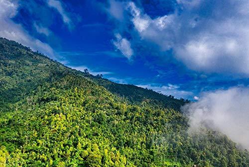 HQHff Montaña Bosque Pendiente Nube Niebla exuberante,Puzzles Adultos 1500 Piezas 87x57cm,3D Puzzles de Madera Adultos Regalo de Juguete Educativo para niños