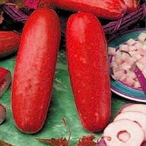 RWS Concombre rouge 10 graines de concombre inhabituel avec beaucoup de goût (rouge concombre)