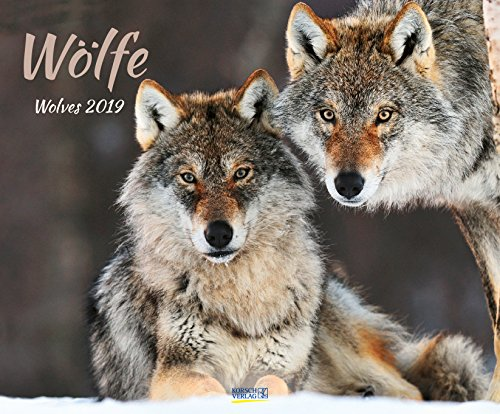Wölfe 208919 2019: Großer Wandkalender. Foto-Kunstkalender über den Wolf. Querformat 55 x 45,5 cm. Hochwertiges Foliendeckblatt.