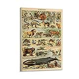QIUPING Póster de Dominio Público Vintage Animales Salvajes Carteles Cuadro Cuadro Cuadro Lienzo 30 × 45 cm