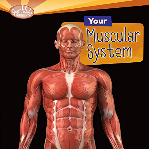 Your Muscular System audiobook cover art