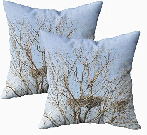 Fundas de almohada de cama, diseño de nido de pájaros con árbol desnudo contra el cielo azul 45.7 x 45.7 cm, fundas de almohada para sofá o sofá